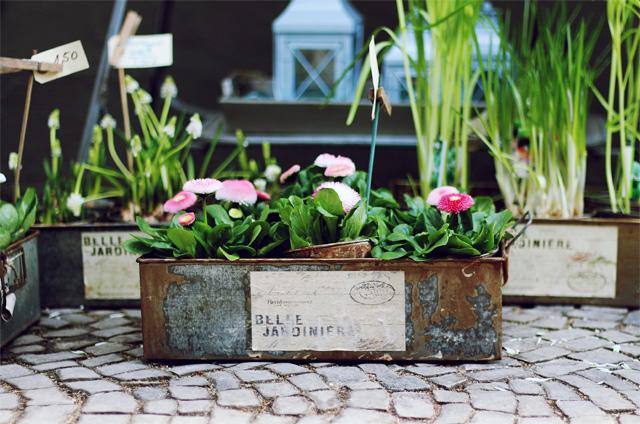 förde fräulein blücherplatz rosa rostig blumenladen kiel vintage