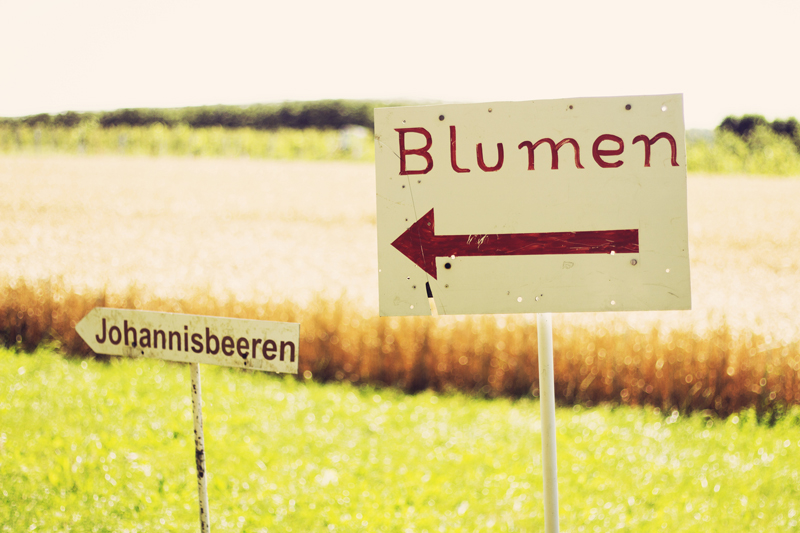 Himbeerhof19