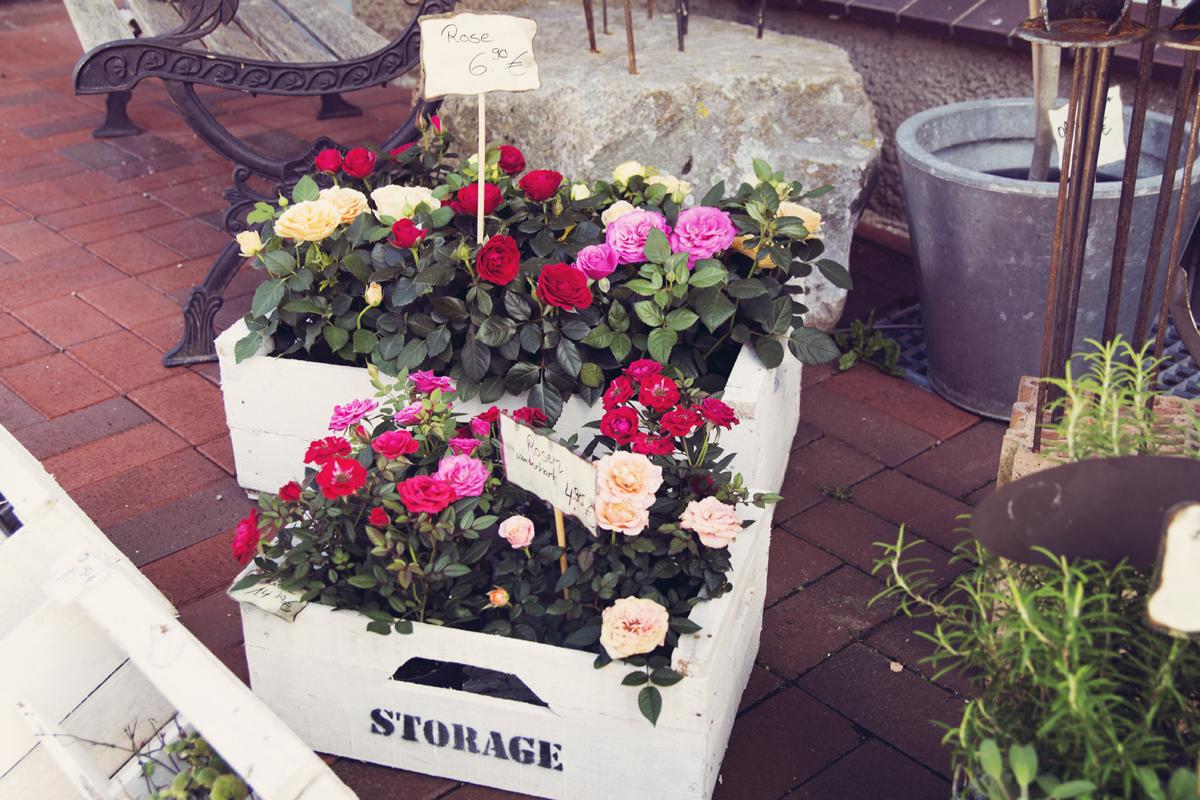 Blumen-Kiste-Rose-Steinreich