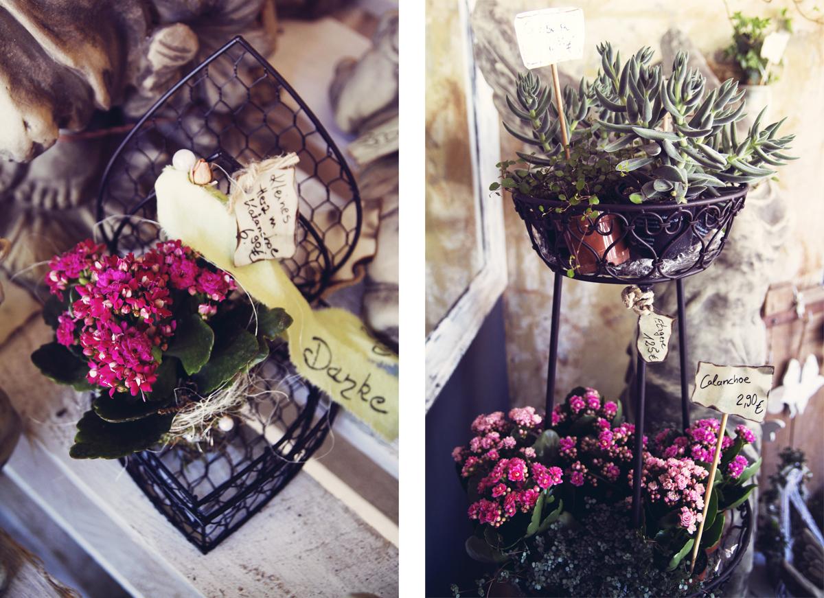 Blumen-Steinreich