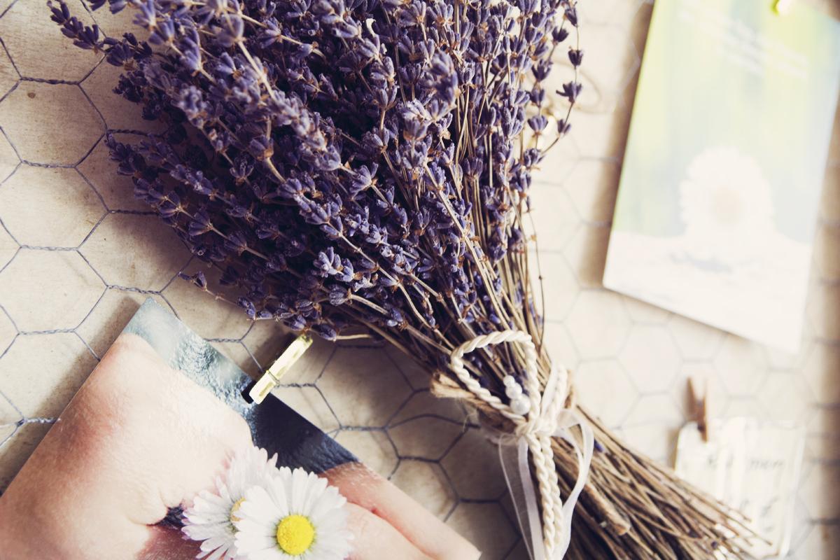 Lavendel-Postkarte