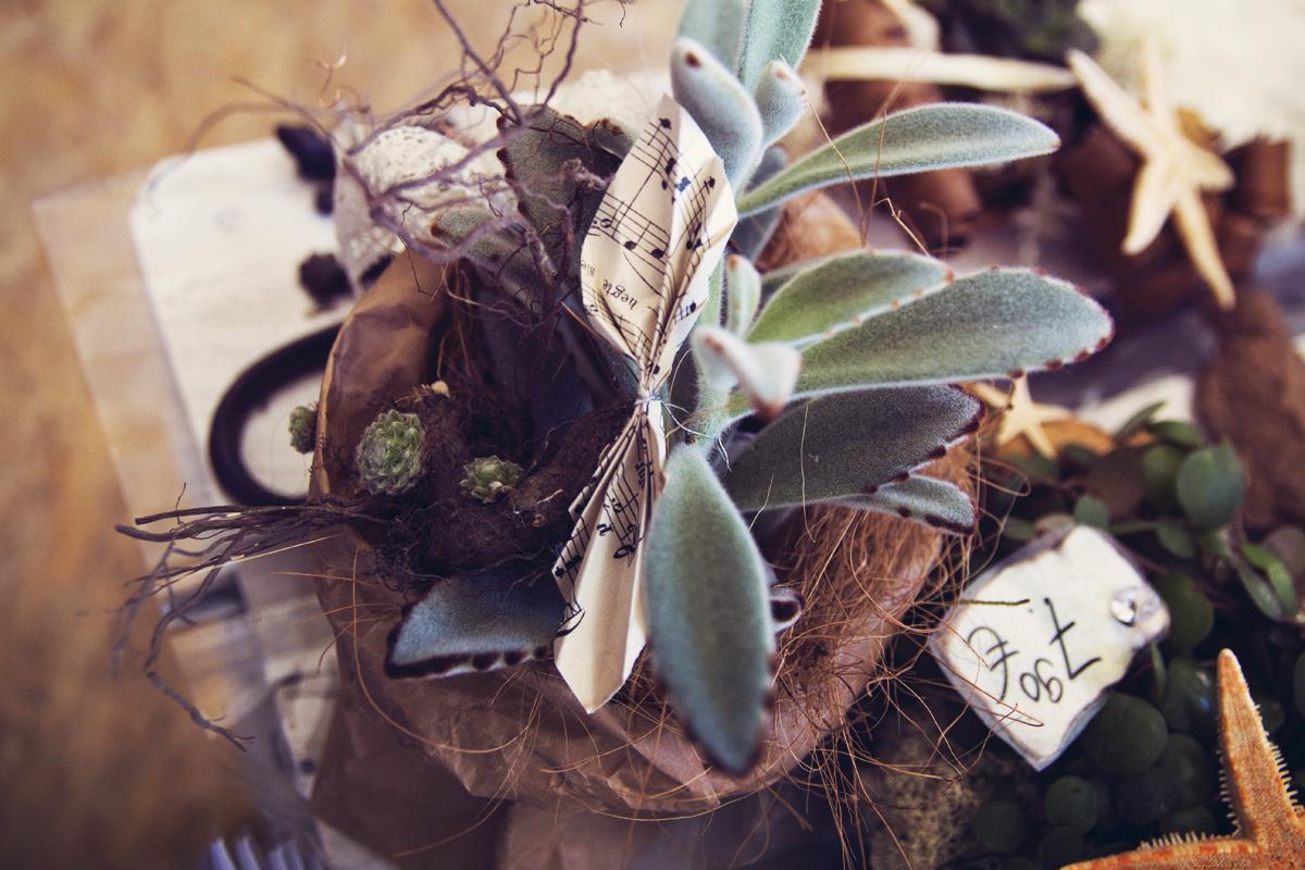 Pflanze-Blume-Danke-Steinreich