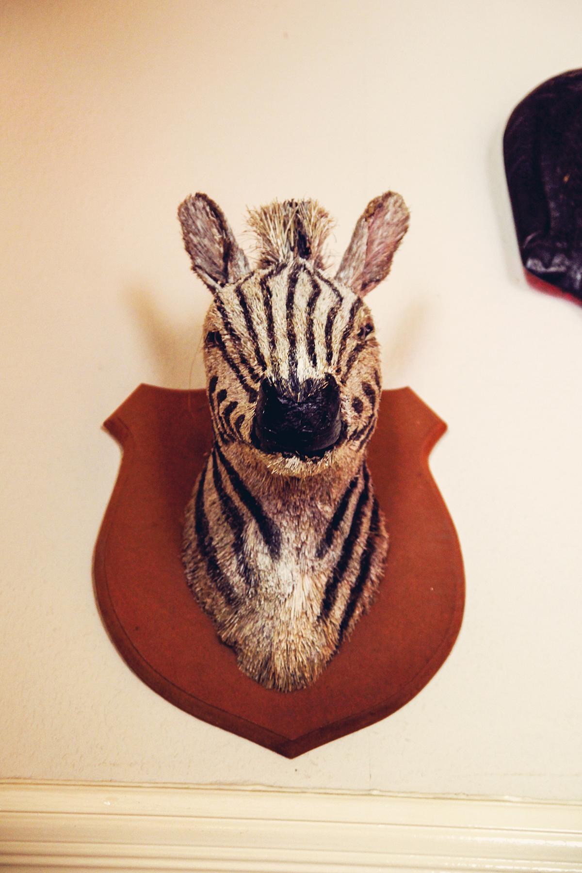 zebra-barcultura-kiel