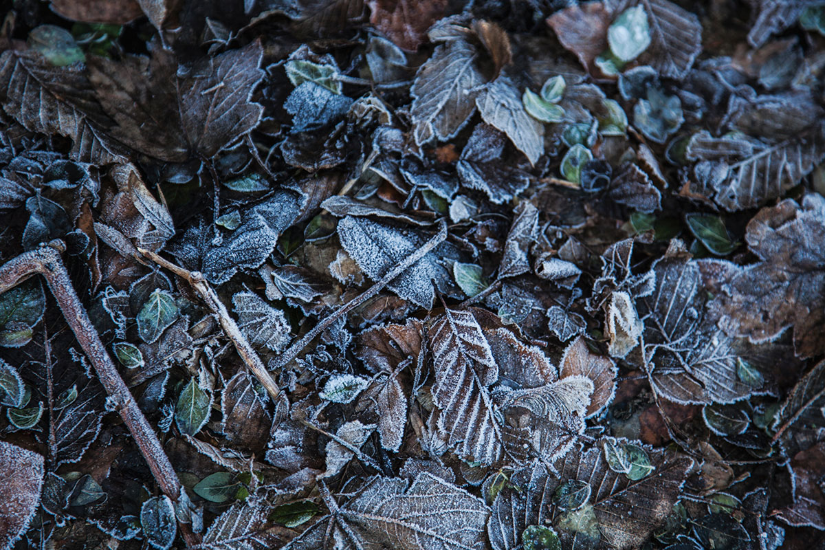 wintertag-kiel-foerdefraeulein-foerde-sonne-ausblick-hdw-kiellinie-derbehamburg-kapuzenpullover-seemansknoten-blau-laub-eis-2