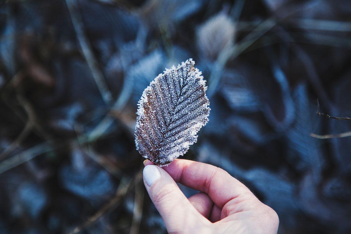 wintertag-kiel-foerdefraeulein-foerde-sonne-ausblick-hdw-kiellinie-derbehamburg-kapuzenpullover-seemansknoten-blau-laub-eis-blatt-detail