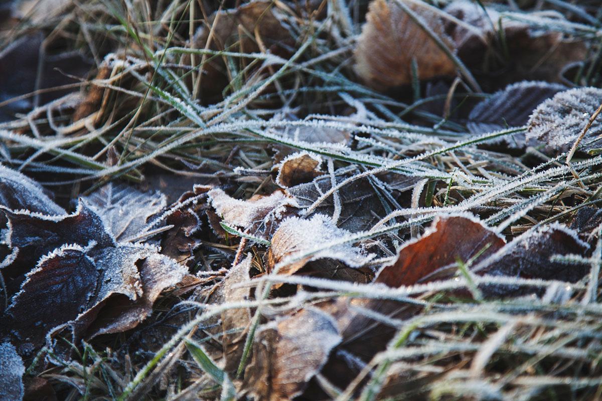 wintertag-kiel-foerdefraeulein-foerde-sonne-ausblick-hdw-kiellinie-derbehamburg-kapuzenpullover-seemansknoten-blau-laub-eis-schnee-gras