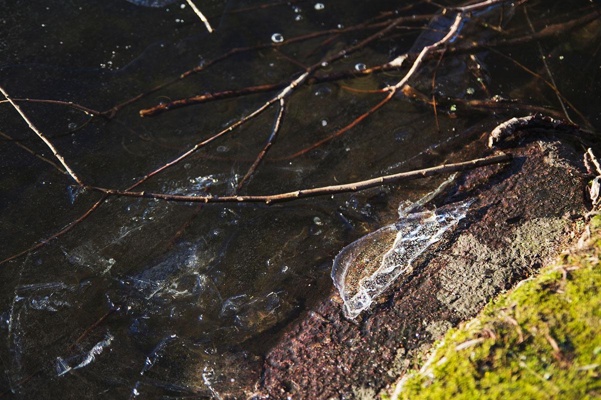 wintertag-kiel-foerdefraeulein-schrevenpark-eisscholle
