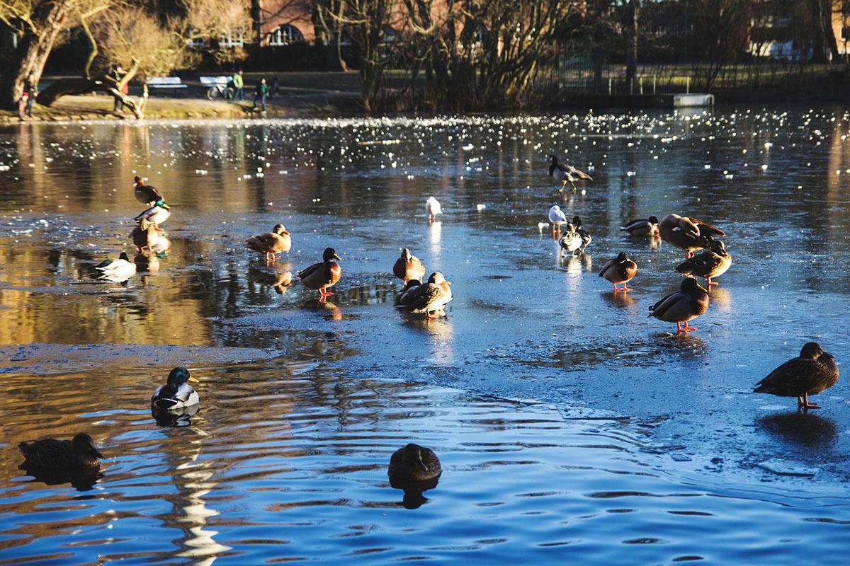 Ein Wintertag in Kiel: Spazieren an der Förde und im Schrevenpark, Kaffee trinken Café Hilda und heiße Schokolade selber machen