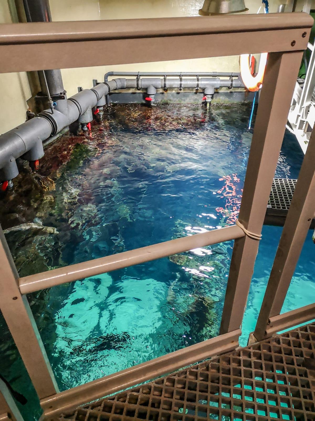 Ein Tag im Naturschutz-Zentrum Multimar Wattforum in Tönning: Auf den Spuren des Schleswig-Holsteinischen Wattenmeers