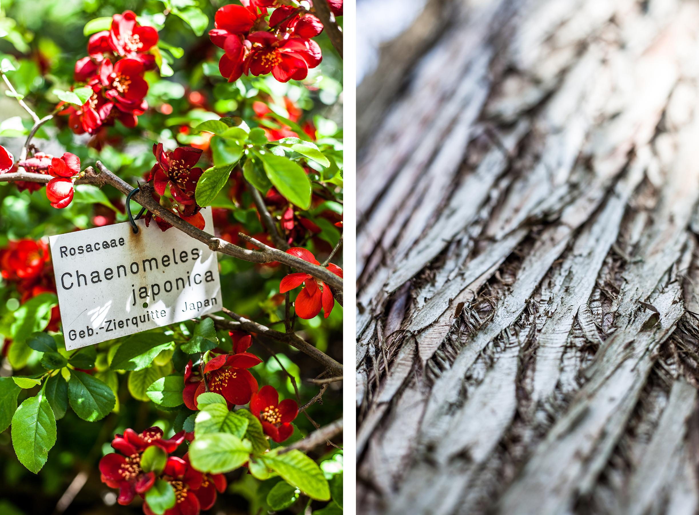 Lieblingsecken in Kiel: Der Alte Botanische Garten