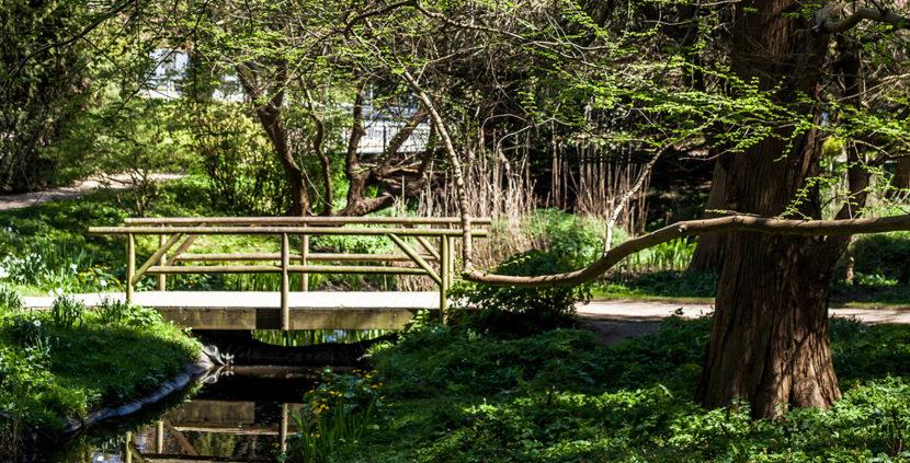 Alter Botanischer Garten Kiel: Alter_Botanischer_Garten_Kiel-3b