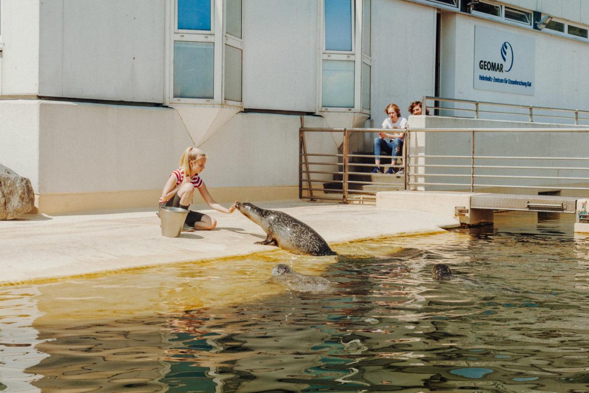 Kiel Kiellinie Aquarium Geomar Seehundbecken