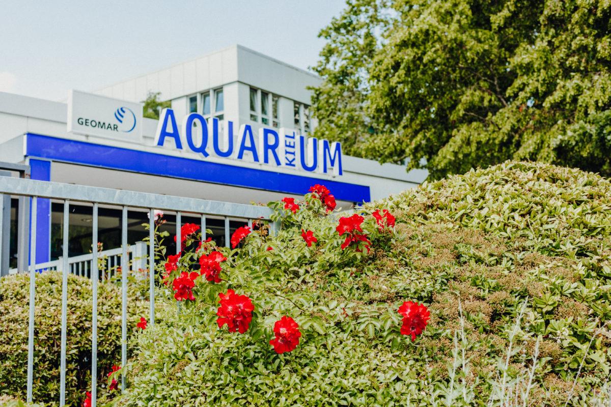 Kiel Kiellinie Aquarium Geomar