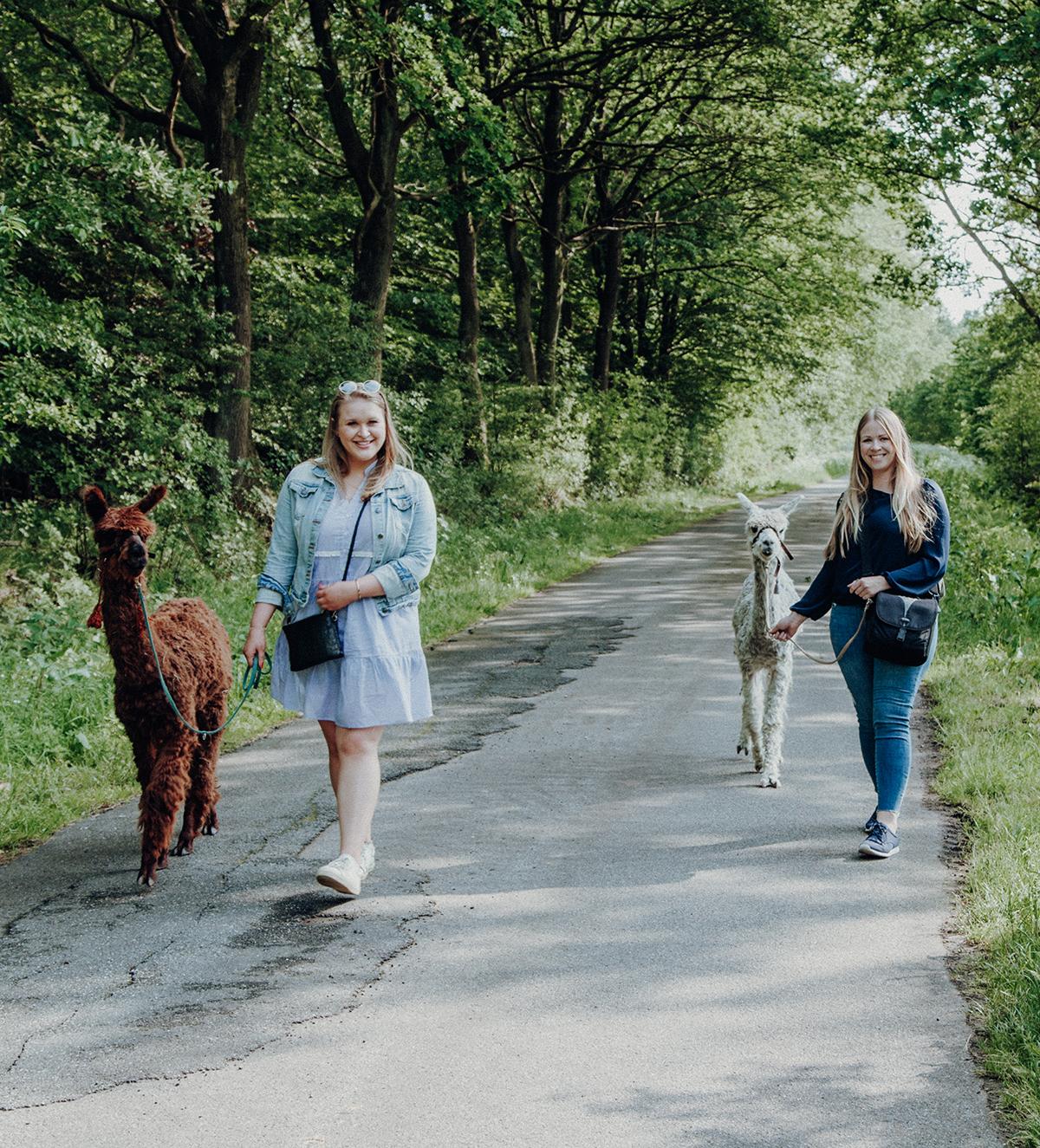 Ein Spaziergang mit Alpakas und Lamas in Schleswig-Holstein