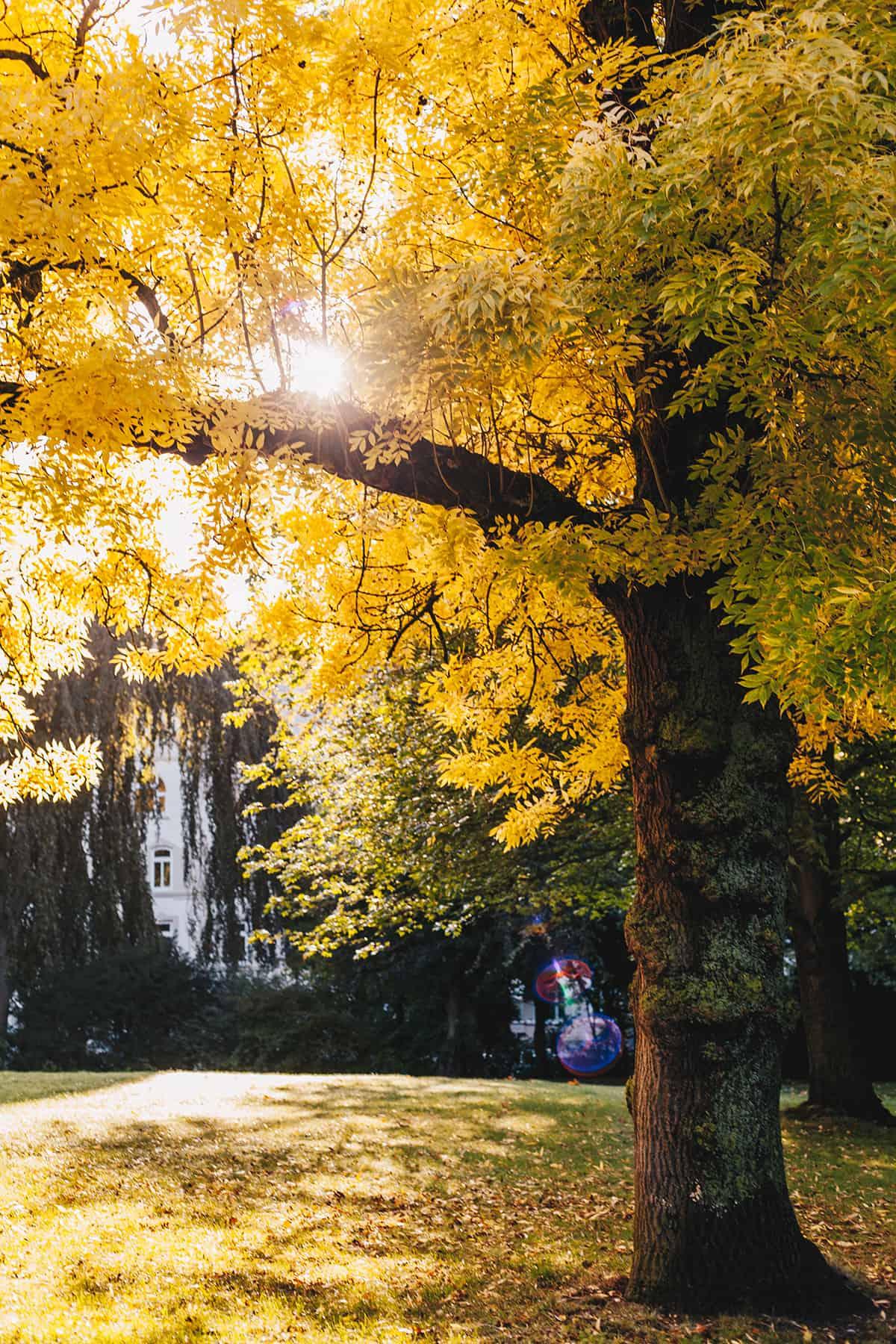 Herbst_Kiel_Schrevenpark