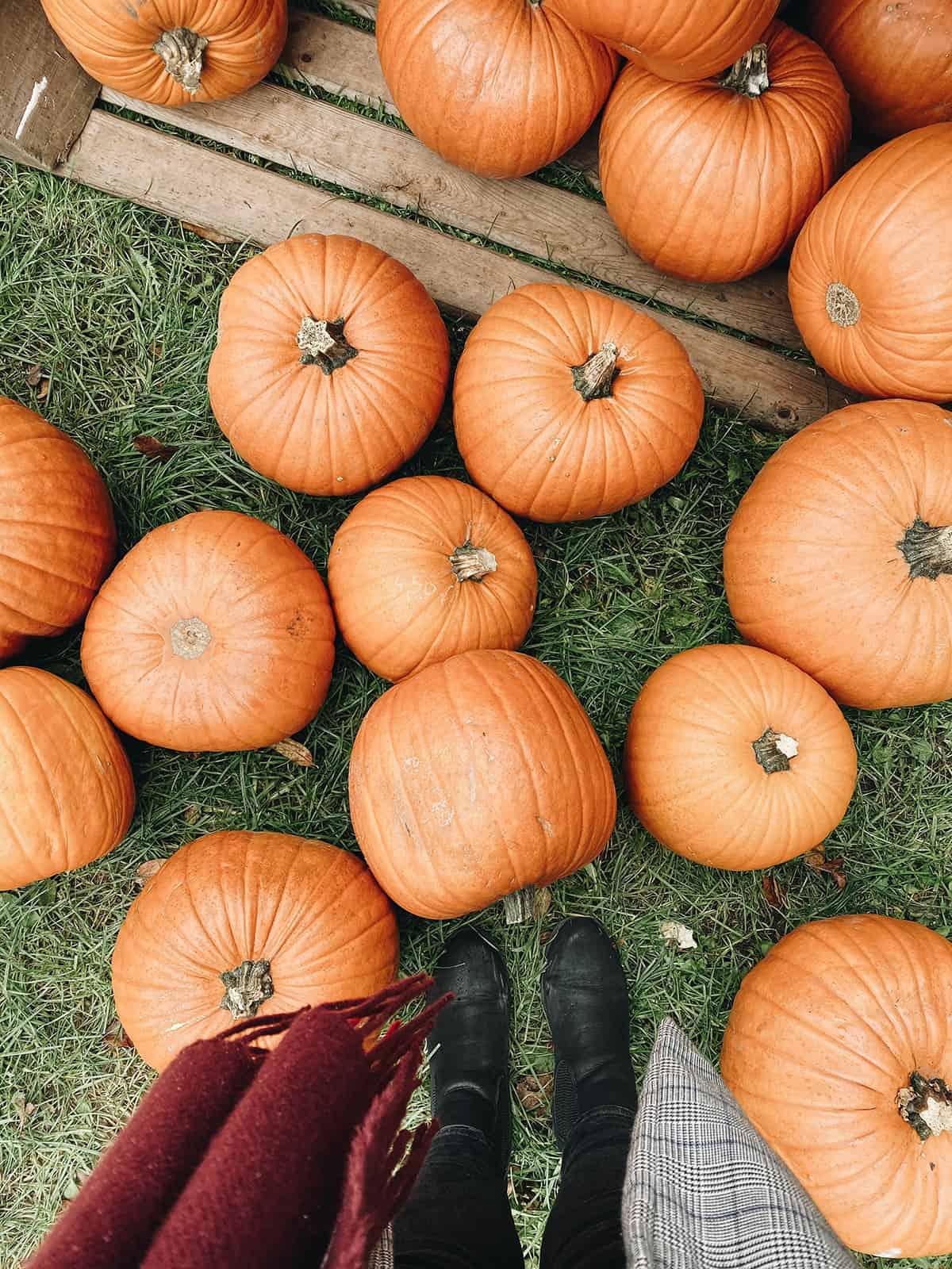 Kürbisse Herbstmarkt Molfee Freilichtmuseum