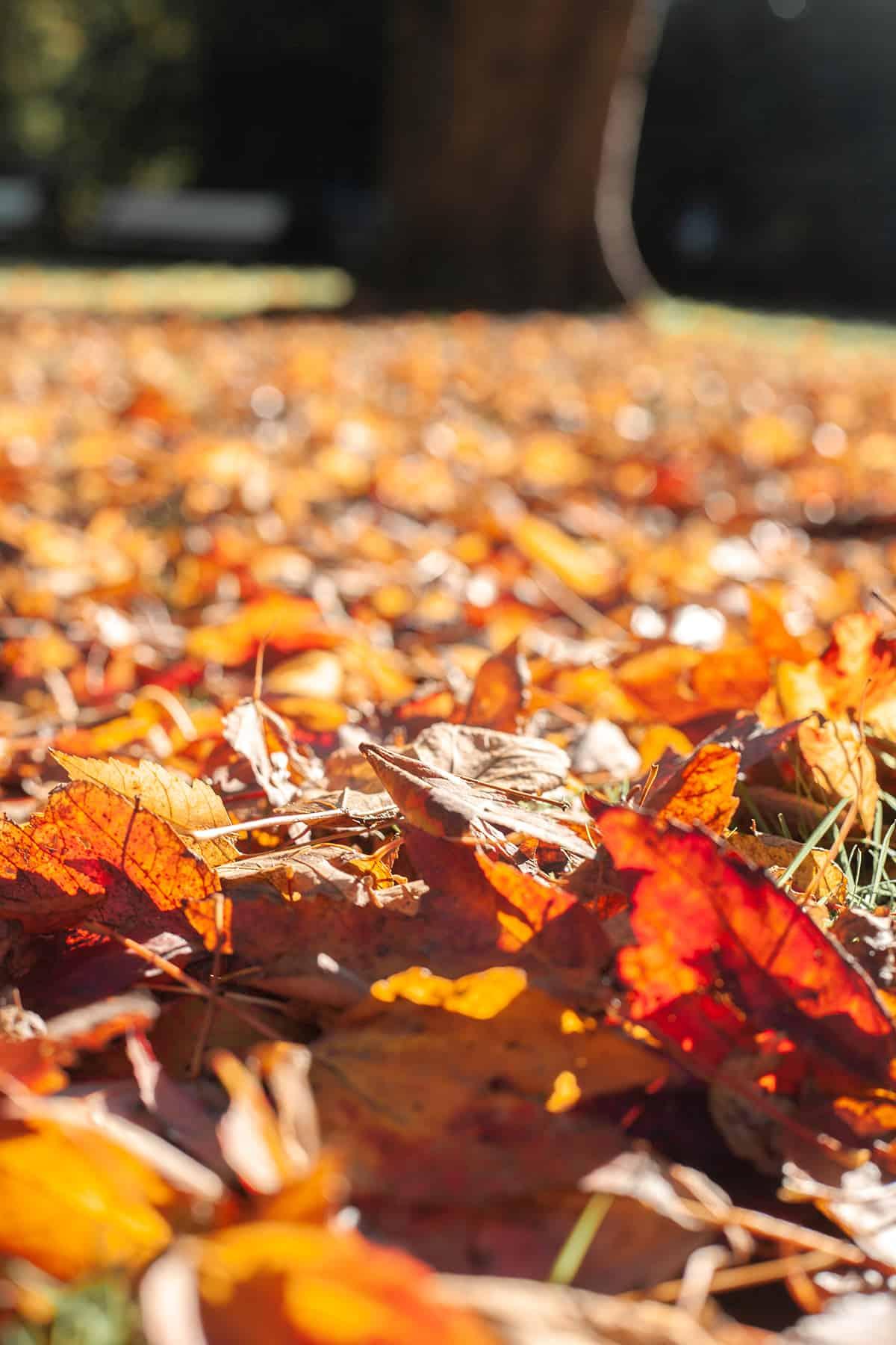 Herbstlaub Schrevenpark Kiel
