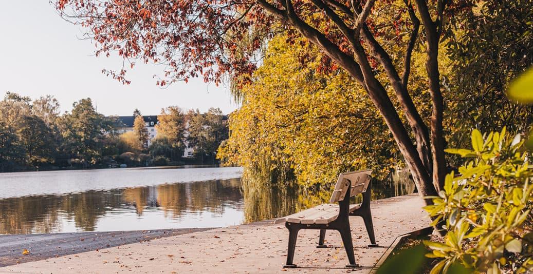 Herbstlaub Baum Schrevenpark Kiel Bank