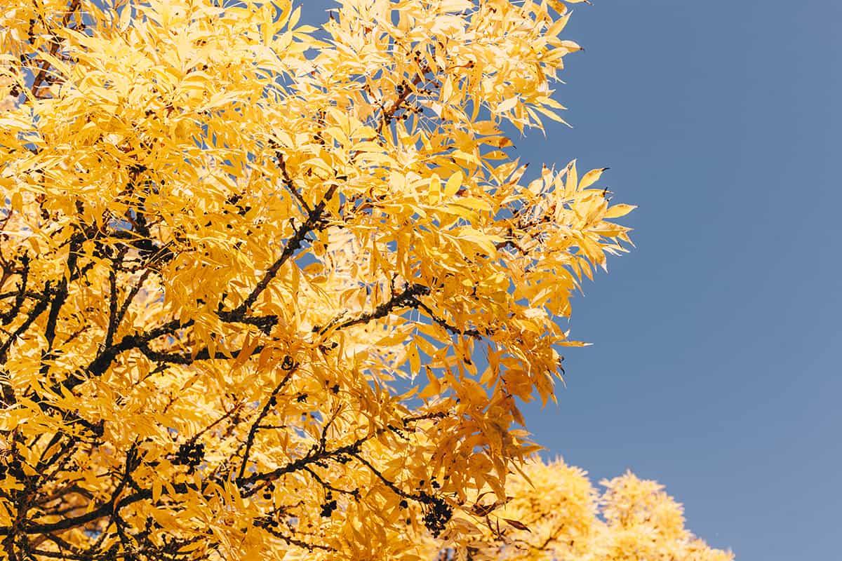 Herbstlaub Baum Schrevenpark Kiel