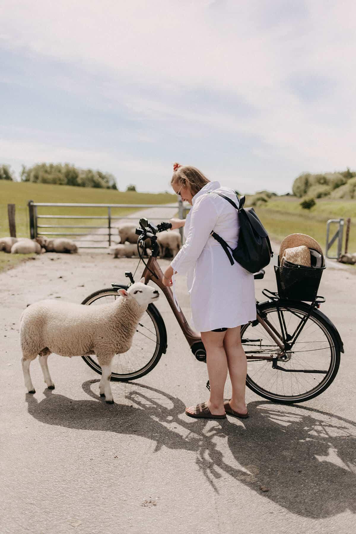 Frau streichelt Schaf