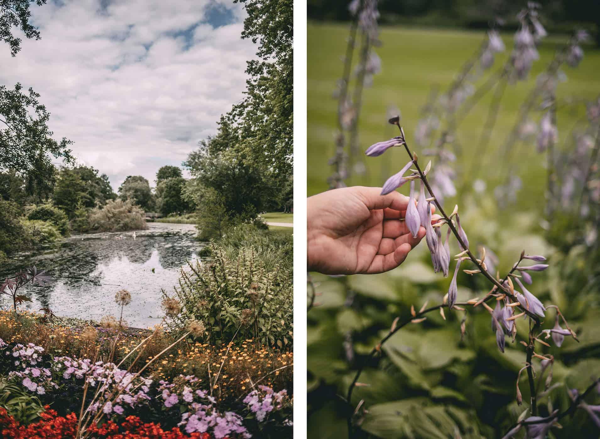 Kurpark Pflanzen und Blumen