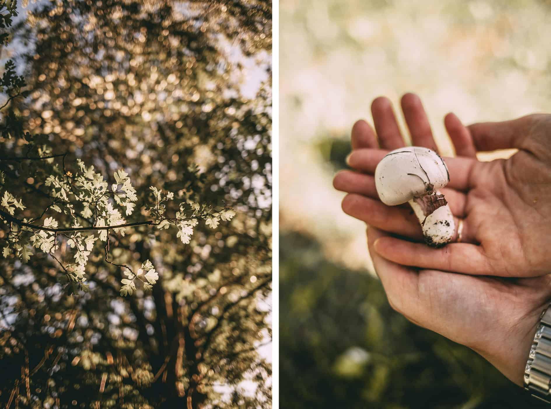 Blätter und Pilz Nahaufnahmen