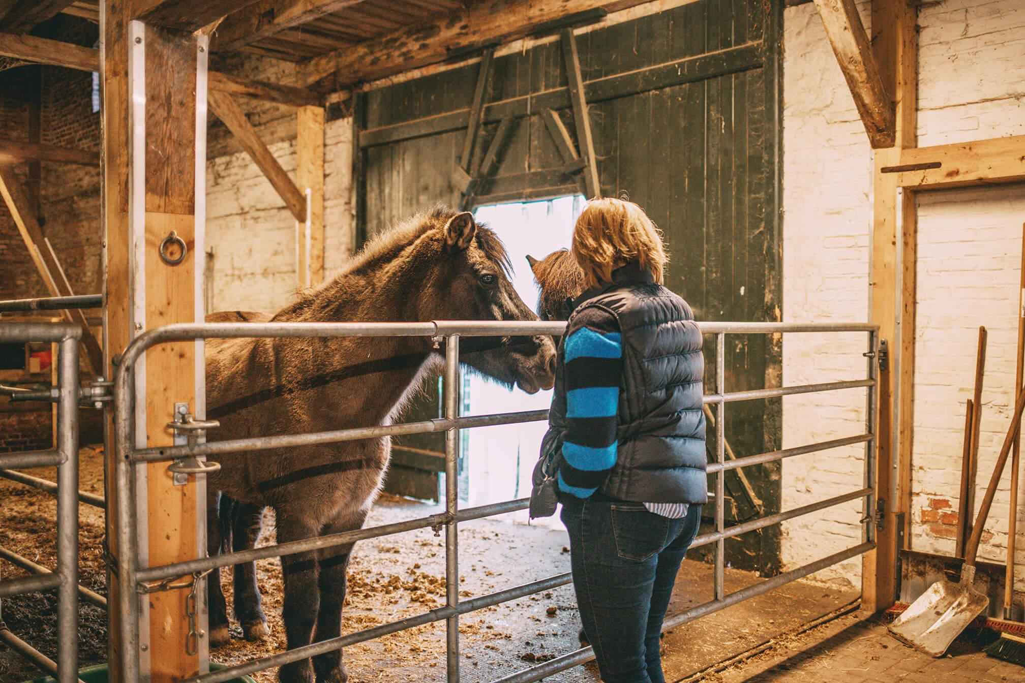Eva mit ihren Pferden