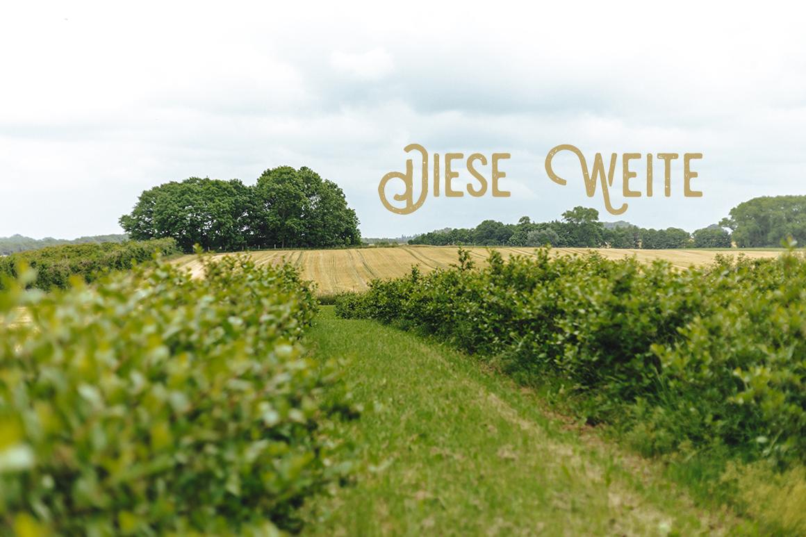 Erdbeer- und Himbeerhof Gut Steinwehr: Erdbeeren pflücken