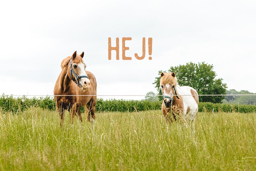 Erdbeer- und Himbeerhof Gut Steinwehr: Pferde
