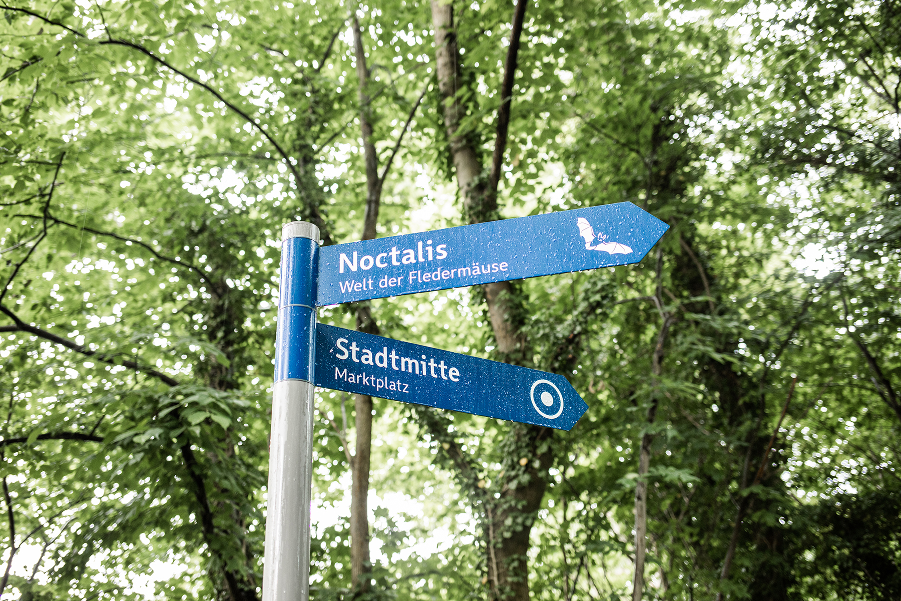Noctalis Bad Segeberg: Schild